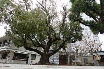 難波神社の自然