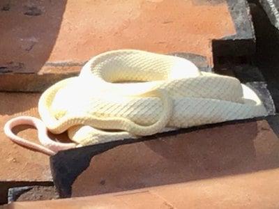山口県岩国白蛇神社の写真