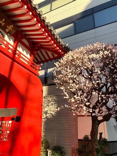 東京都海蔵寺の建物その他