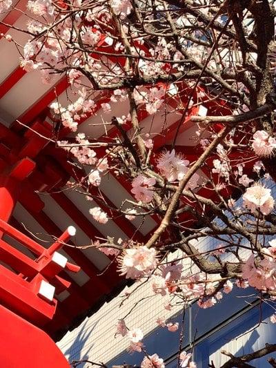 東京都海蔵寺の自然
