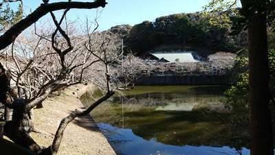 安房神社の庭園