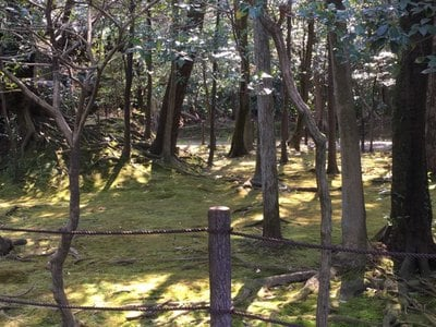 耕雲院の近くの神社お寺|妙興報恩禅寺(妙興寺)