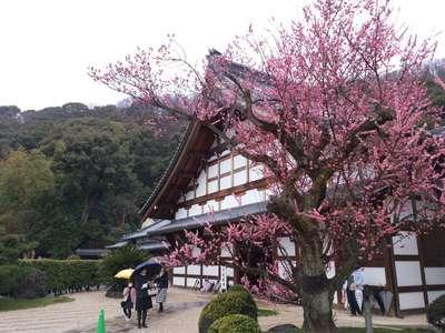 開善院の近くの神社お寺|金寶山 瑞龍寺