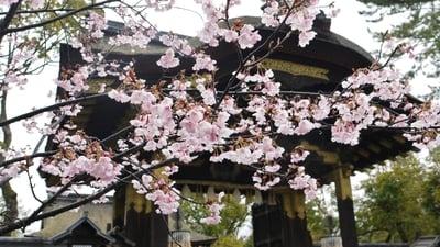 豊国神社(京都府七条駅) - 未分類の写真