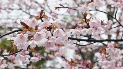 豊国神社(京都府七条駅) - 自然の写真