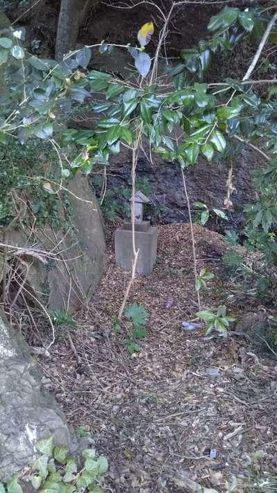 草薙神社の自然