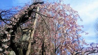 長建寺(京都府中書島駅) - 自然の写真