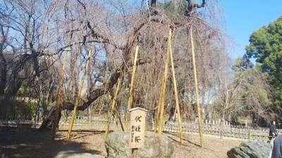 弘法寺の庭園