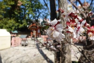 率川神社の自然