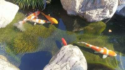 埼玉県海蔵寺の庭園
