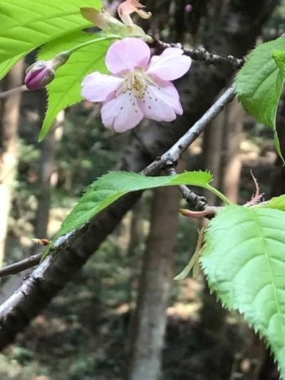 筑波山神社の自然