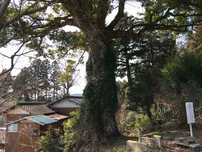 瘡守稲荷の近くの神社お寺|真福寺