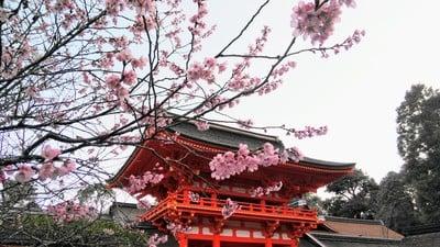賀茂別雷神社(上賀茂神社)(京都府北山駅) - その他建物の写真