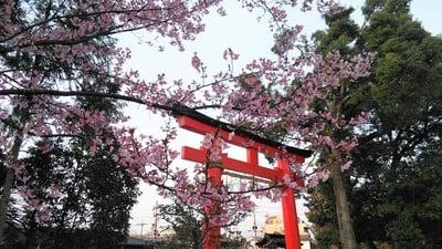 賀茂別雷神社(上賀茂神社)(京都府北山駅) - 鳥居の写真