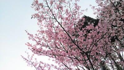 賀茂別雷神社(上賀茂神社)(京都府北山駅) - 自然の写真