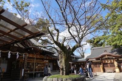 護王神社の自然