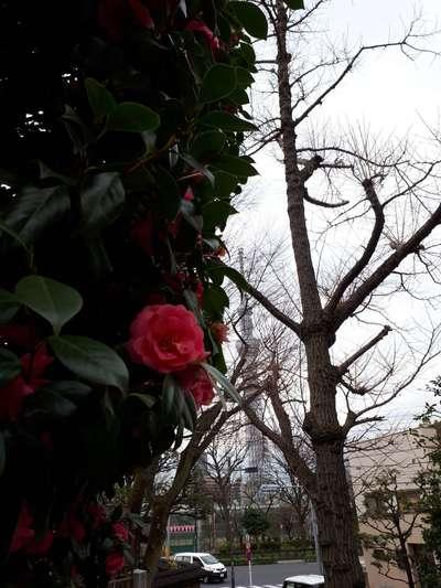 待乳山聖天(本龍院)の自然