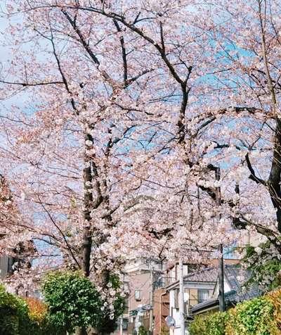 東京都中曽根神社の写真