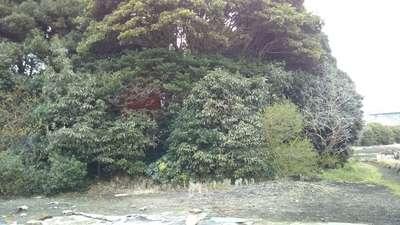 赤坂稲荷神社の自然