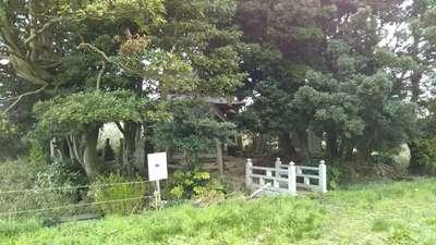 起松神社の自然