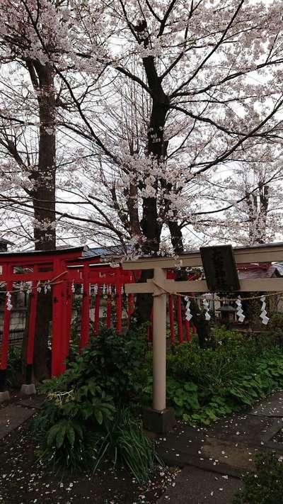 神奈川県金山神社の鳥居