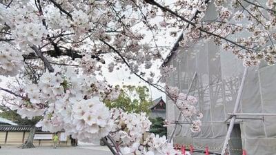 東寺(教王護国寺)(京都府東寺駅) - 未分類の写真
