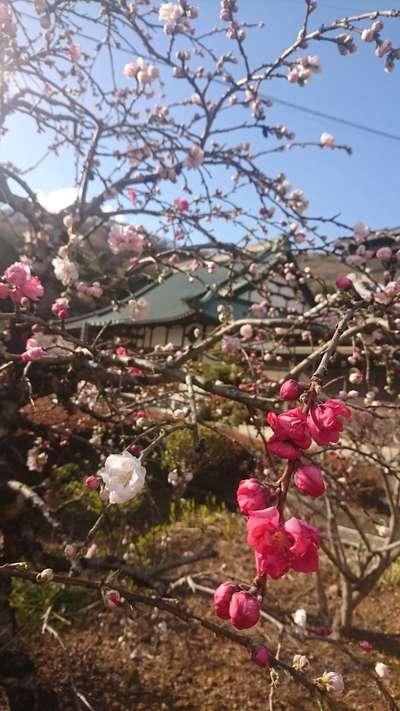 明鏡山龍雲寺の庭園