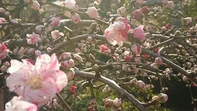 明鏡山龍雲寺の自然