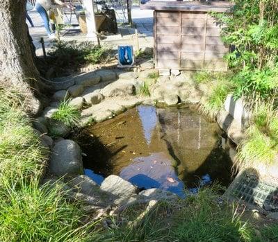 菊田神社(千葉県京成津田沼駅) - 自然の写真
