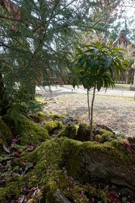 金峯山寺の庭園