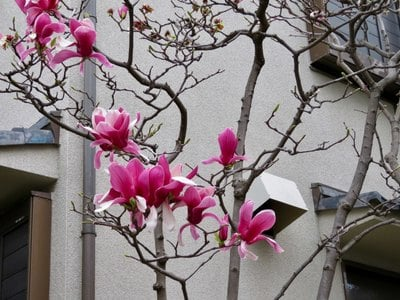 東京都正円寺の庭園