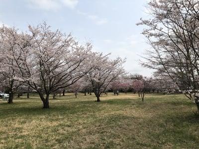 女化神社の庭園