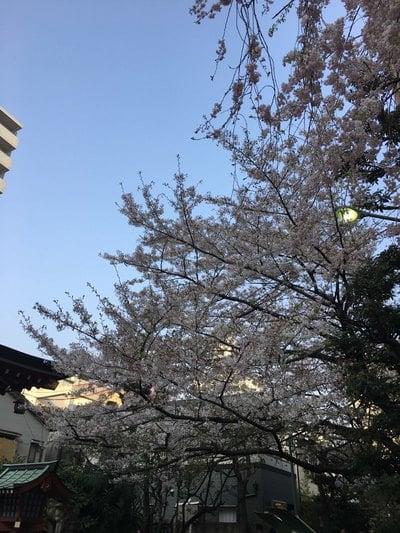秋葉神社(東京都入谷駅) - 自然の写真