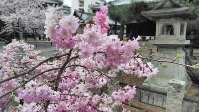 本法寺の自然