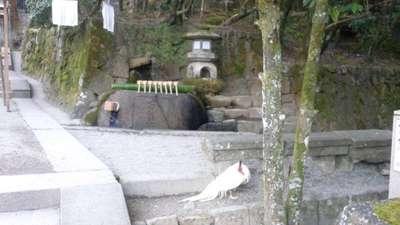 石上神宮の建物その他