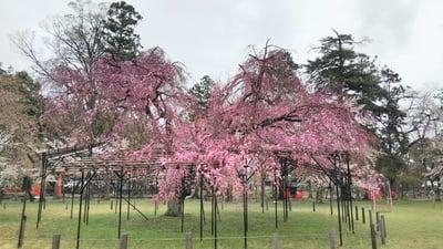 賀茂別雷神社(上賀茂神社)(京都府北山駅) - 庭園の写真