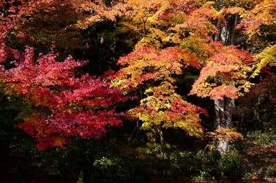 立石寺の庭園