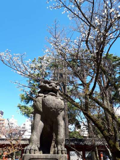 根津神社(東京都根津駅) - 狛犬の写真