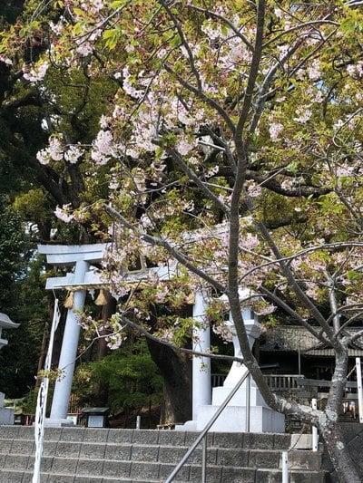 事任八幡宮(静岡県菊川駅) - その他建物の写真