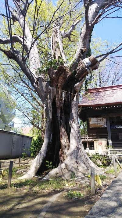 大鷲神社(千葉県)