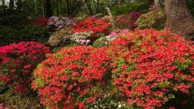 神奈川県等覚院の庭園