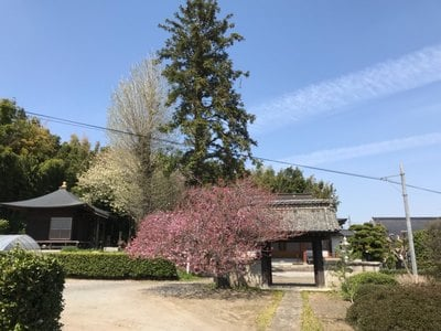 栃木県浄光寺の写真