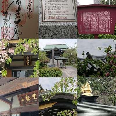 東京都南藏院の写真