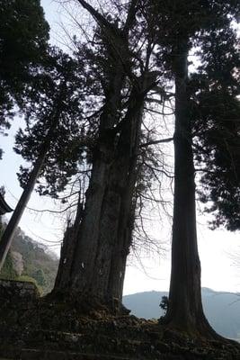 奈良県田口水分神社の自然