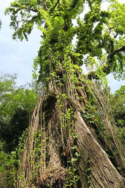 太郎稲荷神社の自然