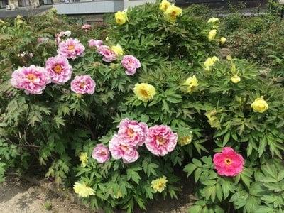 慈眼寺の庭園