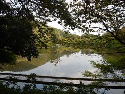 京都府龍安寺の写真