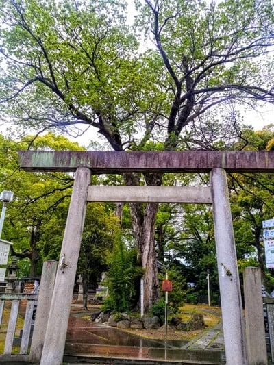 愛知県片山神社の本殿