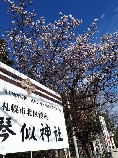 新琴似神社(北海道新琴似駅) - その他建物の写真