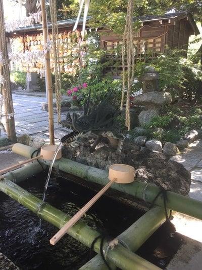 菊田神社(千葉県京成津田沼駅) - 手水舎の写真
